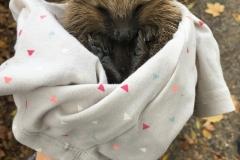 Záchrana ježka